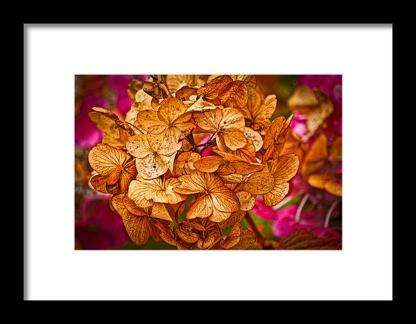 Autumn Framed Print featuring the photograph Dying Beauty by Ronda Broatch