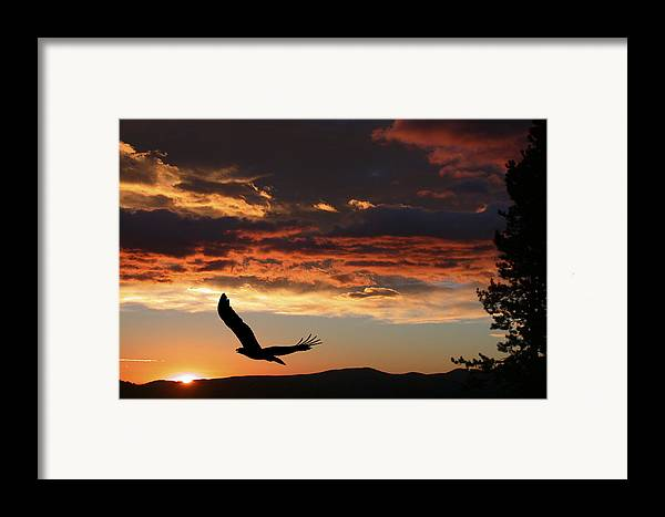 Bald Eagle Framed Print featuring the photograph Eagle At Sunset by Shane Bechler