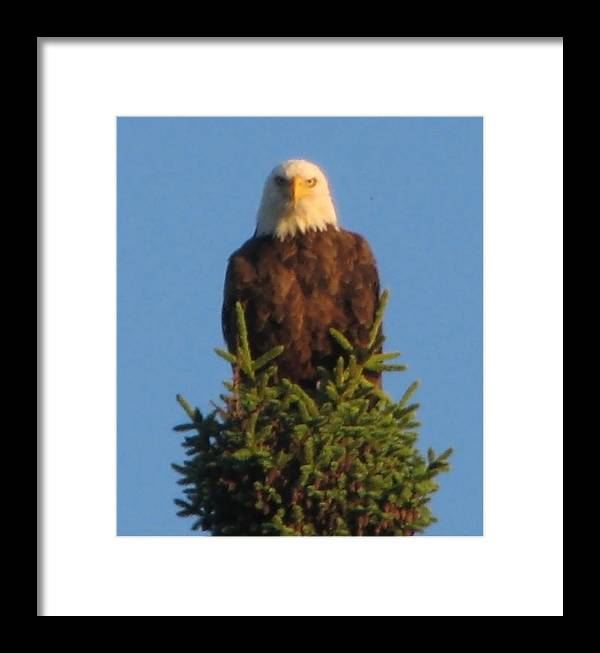 Framed Print featuring the photograph Eagle Eye by Matthew Barton