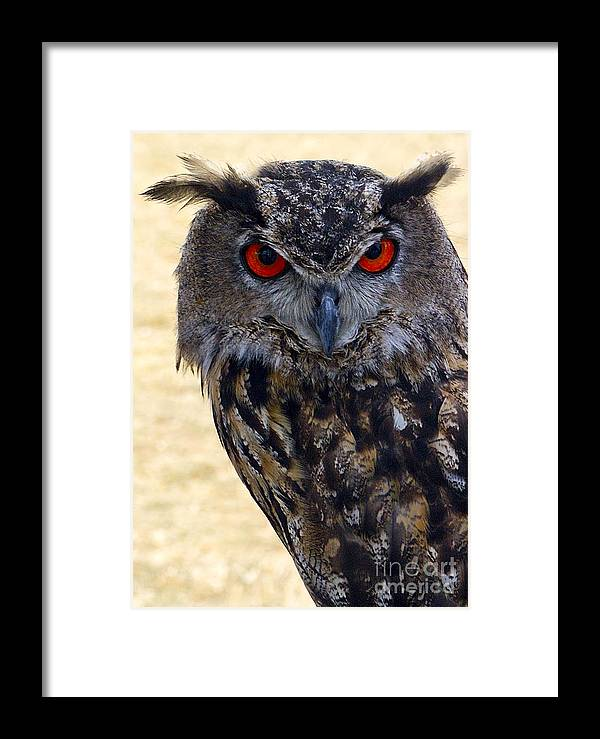 Owl Framed Print featuring the photograph Eagle Owl by Anthony Sacco
