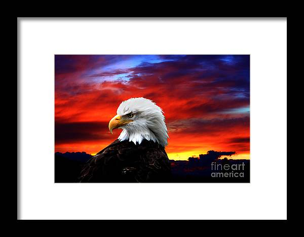 Eagle Framed Print featuring the photograph Eagle Sunset by Nick Gustafson
