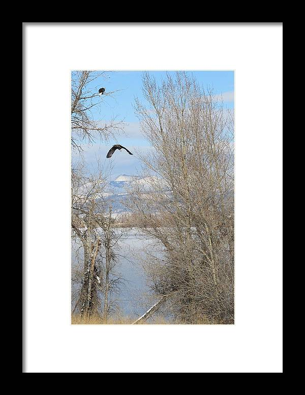 Eagle Framed Print featuring the photograph Eagle Takes Flight by Jesse Woodward