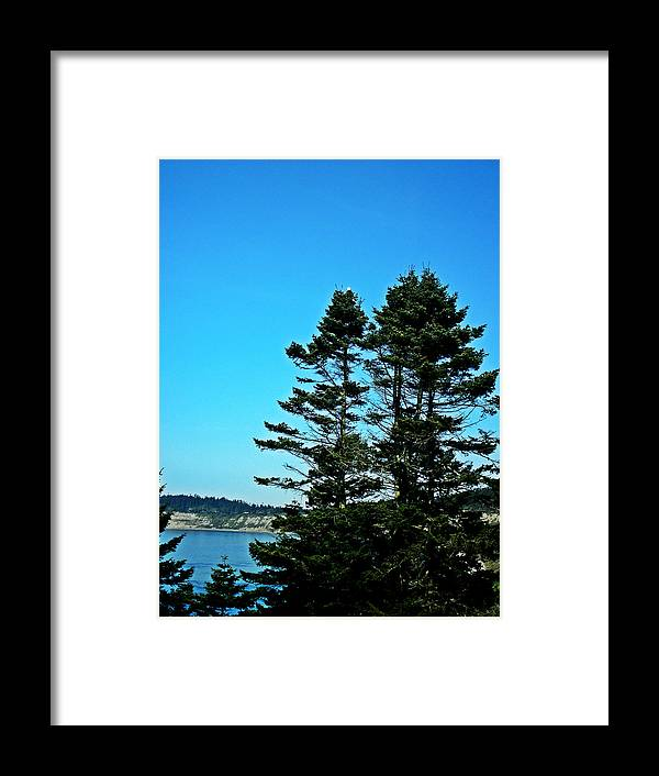 Animal Framed Print featuring the photograph Eagle's Landing by Kevin D Davis