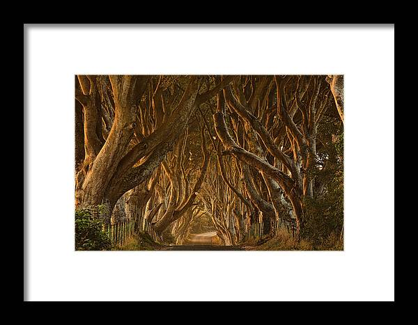 Dark Framed Print featuring the photograph Early Morning Dark Hedges by Derek Smyth
