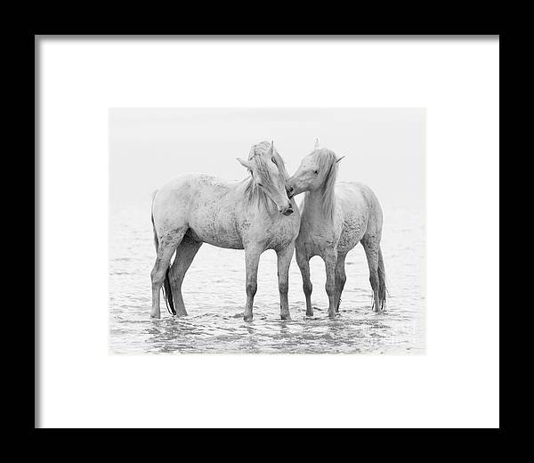 Early Morning Horse Play Framed Print by Carol Walker