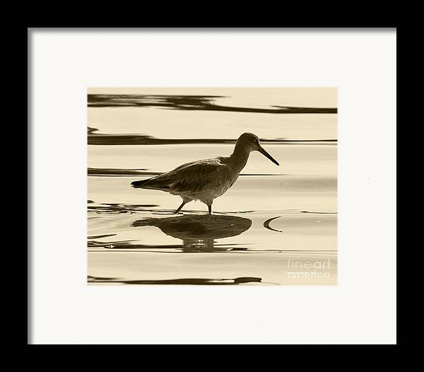 Gaviota Framed Print featuring the photograph Early Morning In The Moss Landing Harbor Picture Of A Willet by Artist and Photographer Laura Wrede