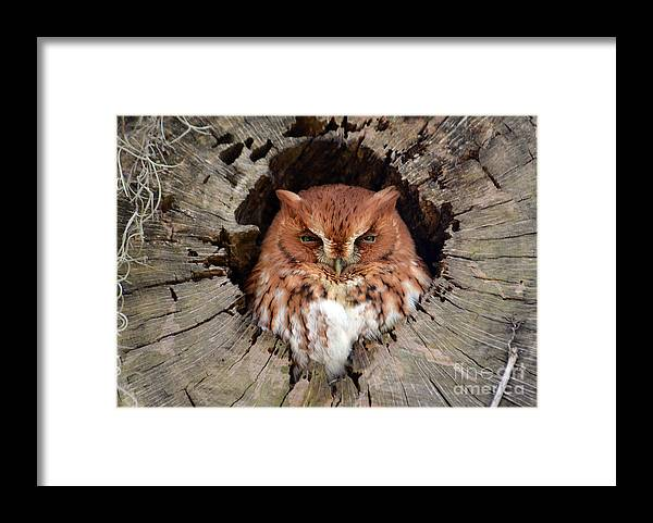 Owl Framed Print featuring the photograph Eastern Screech Owl by Kathy Baccari