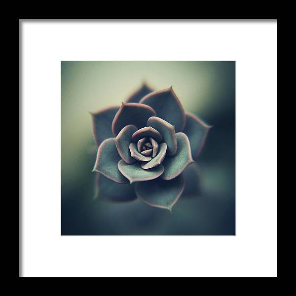 Outdoors Framed Print featuring the photograph Echeveria Macro by Con Ryan