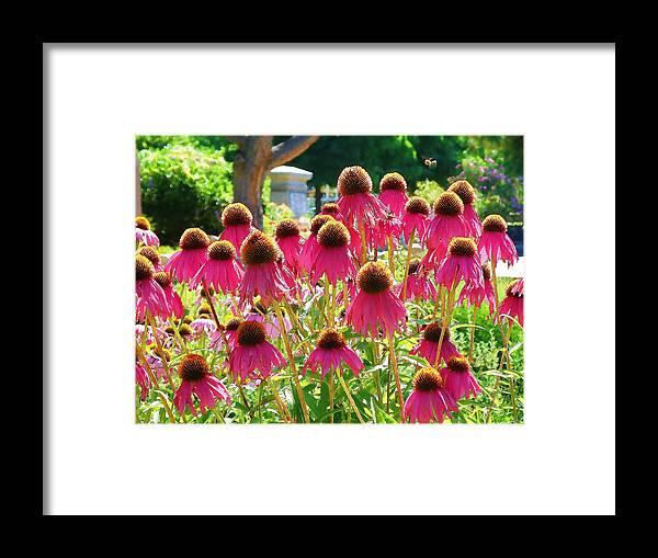 Echinacea Flowers Framed Print featuring the digital art Echinacea Flowers by Devalyn Marshall