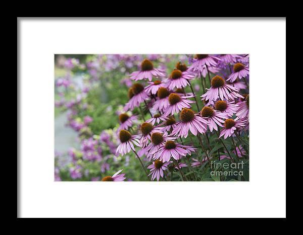 Echinacea Purpurea Framed Print featuring the photograph Echinacea Purpurea Rubinglow by Tim Gainey