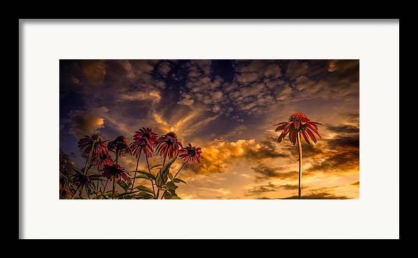 Flower Framed Print featuring the photograph Echinacea Sunset by Bob Orsillo