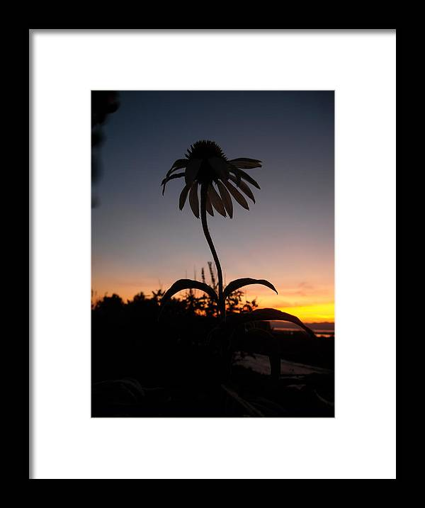 Flower Framed Print featuring the photograph Echinacea Sunset by Ishana Ingerman