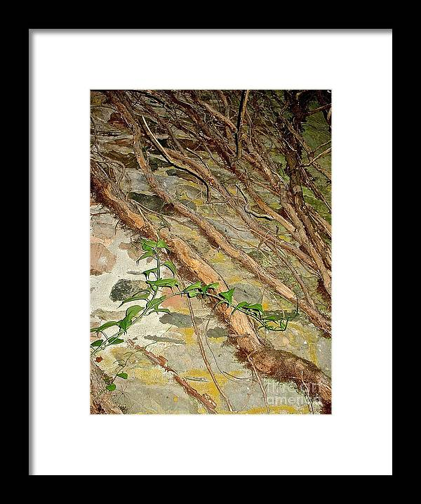 Ivy Climbing An Old Stone Wall Prints Framed Print featuring the photograph Effects by Delona Seserman