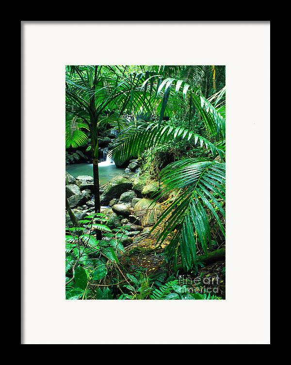 Puerto Rico Framed Print featuring the photograph El Yunque Palm Trees And Waterfall by Thomas R Fletcher