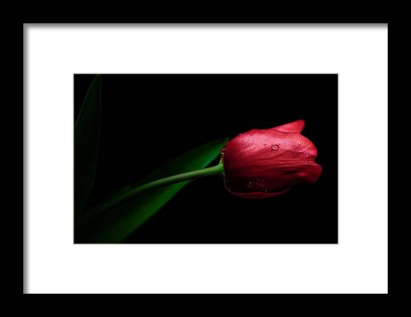 Red Tulip Framed Print featuring the photograph Elegance by Nataly Rubeo
