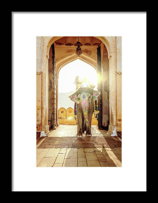 Working Animal Framed Print featuring the photograph Elephant At Amber Palace Jaipur,india by Mlenny