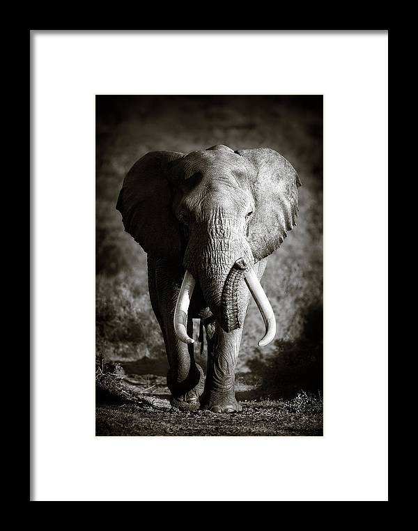 Elephant Framed Print featuring the photograph Elephant Bull by Johan Swanepoel