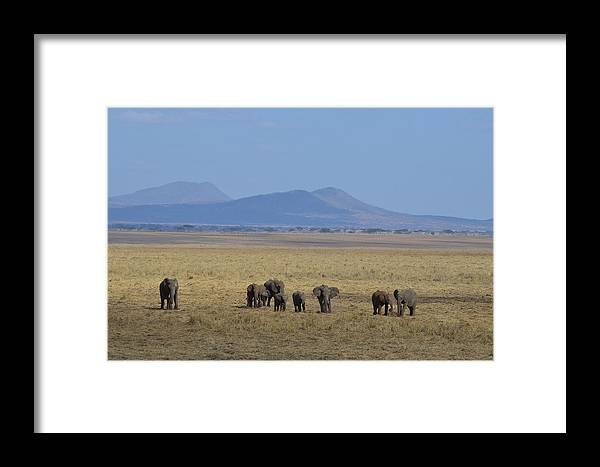 Panoramic Framed Print featuring the photograph Elephant Family With Landscape by Tom Wurl