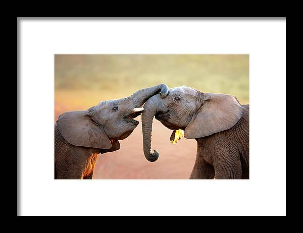 Elephant Framed Print featuring the photograph Elephants Touching Each Other by Johan Swanepoel