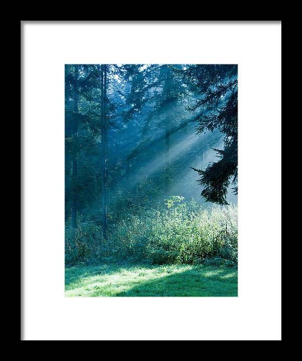 Nature Framed Print featuring the photograph Elven Forest by Daniel Csoka