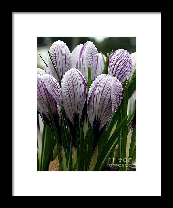 Botanical Framed Print featuring the photograph Emerging by Chris Anderson