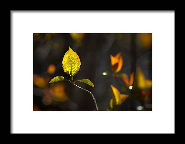 Leaf Framed Print featuring the photograph Emerging From The Darkness by Bill Pevlor