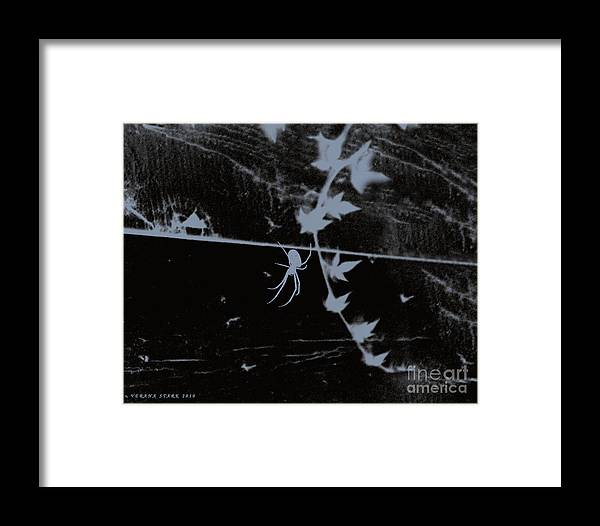 Spider Framed Print featuring the photograph Emphasis From The Series The Elements And Principles Of Art by Verana Stark