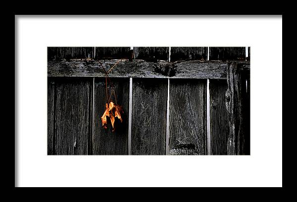 Leaf Framed Print featuring the photograph End Of A Good Year by Charlie Nitro