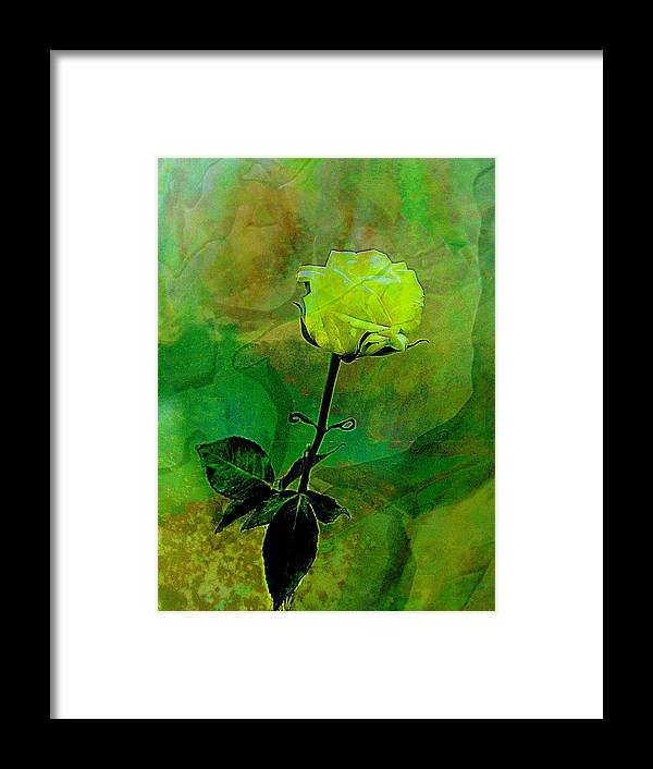 Rose Framed Print featuring the photograph Enduring Yellow Rose by Shirley Sirois