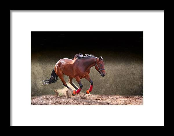 Animal Framed Print featuring the photograph Energetic by Davandra Cribbie