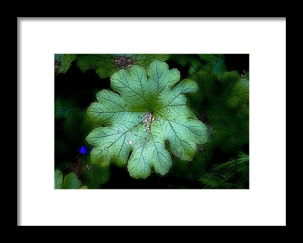 Flora Framed Print featuring the photograph English Garden by Jim Painter
