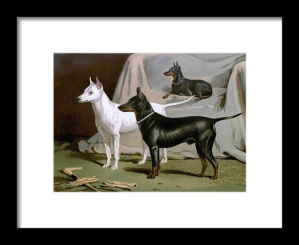 English Framed Print featuring the painting English Terriers by Charlie Ross