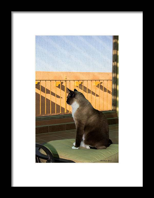 Animal Framed Print featuring the photograph Enjoying The View by Dick Botkin
