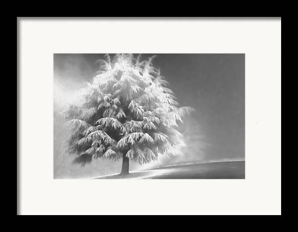 Beauty Framed Print featuring the photograph Enlightened Tree by Don Schwartz