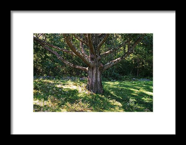 Tree Framed Print featuring the photograph Ent Friend by Ed Pearson