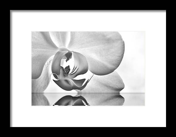Framed Print featuring the photograph Essence by Marty Straub