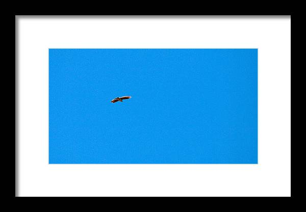 Lehto Framed Print featuring the photograph Eurasian Skylark by Jouko Lehto