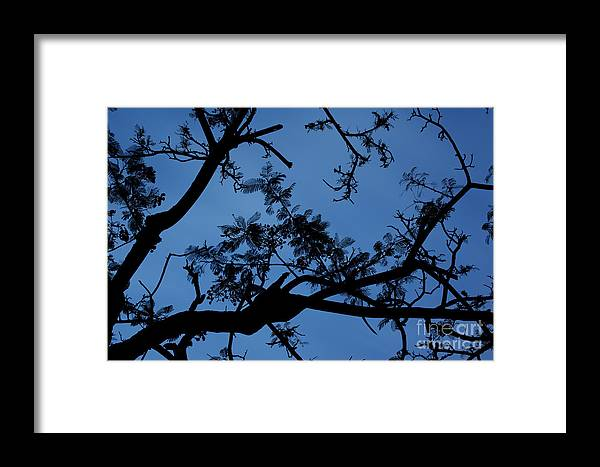 Hawaii Framed Print featuring the photograph Evening Branches by Charmian Vistaunet