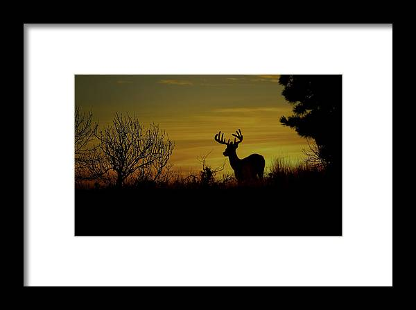 White Tailed Buck Framed Print featuring the photograph Evening Buck by Steve McKinzie