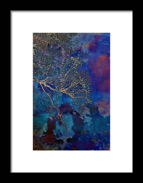 Trees Framed Print featuring the photograph Evening Drama by Jan Amiss Photography