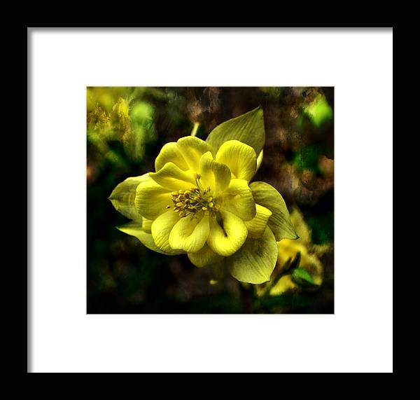 Flower Framed Print featuring the photograph Evening Floral by Deena Stoddard