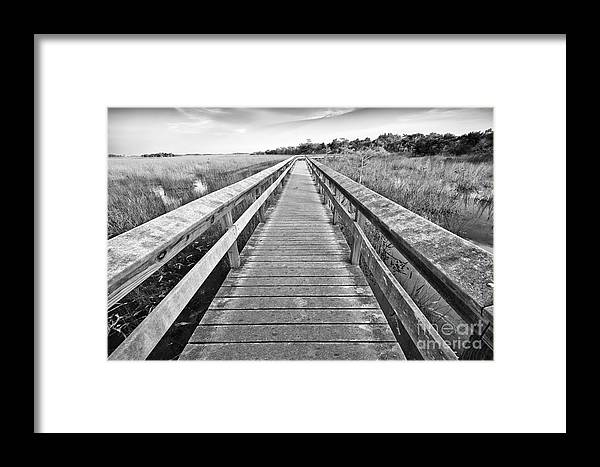 Everglades Framed Print featuring the photograph Everglades Trails by Eyzen M Kim