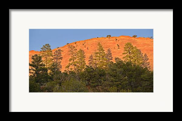 Tree Framed Print featuring the photograph Every Tree In Its Shadow by Christine Till