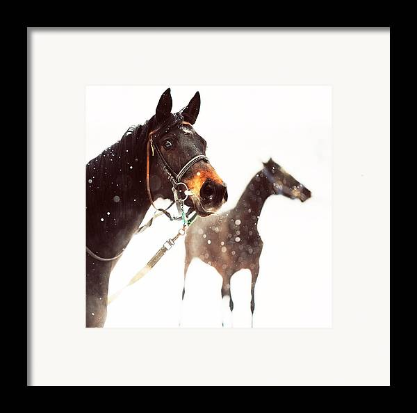 Horse Framed Print featuring the photograph Everyone Has A Dream by Jenny Rainbow