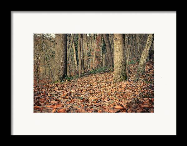 Woods Framed Print featuring the photograph Expectation by Taylan Apukovska