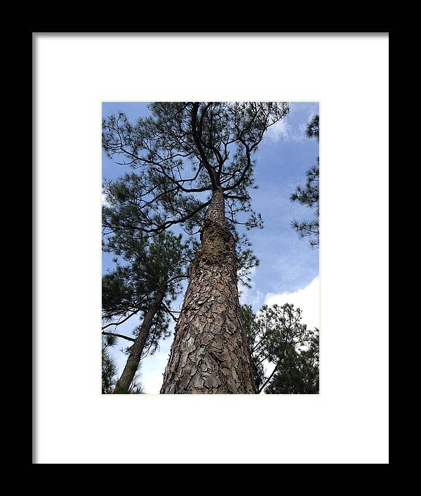 Trees Framed Print featuring the photograph Experimenting With Trees 01 by Ron Hedges