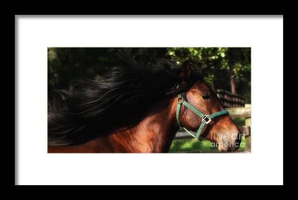 Andalusian Framed Print featuring the photograph Expresso And The Wind by Francine Hall