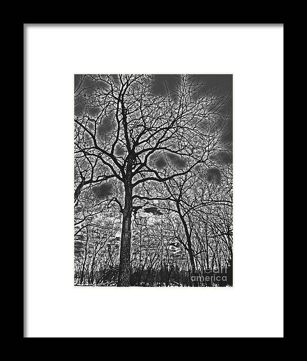 Sky Framed Print featuring the photograph Extreme Contrast Bare Trees During Winter Photograph by Adri Turner