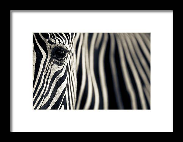 Africa Framed Print featuring the photograph Eye & Stripes by Mario Moreno
