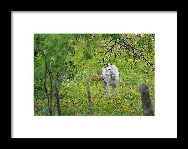 Wildflowers Framed Print featuring the photograph Eye On Beauty by Lynn Bauer